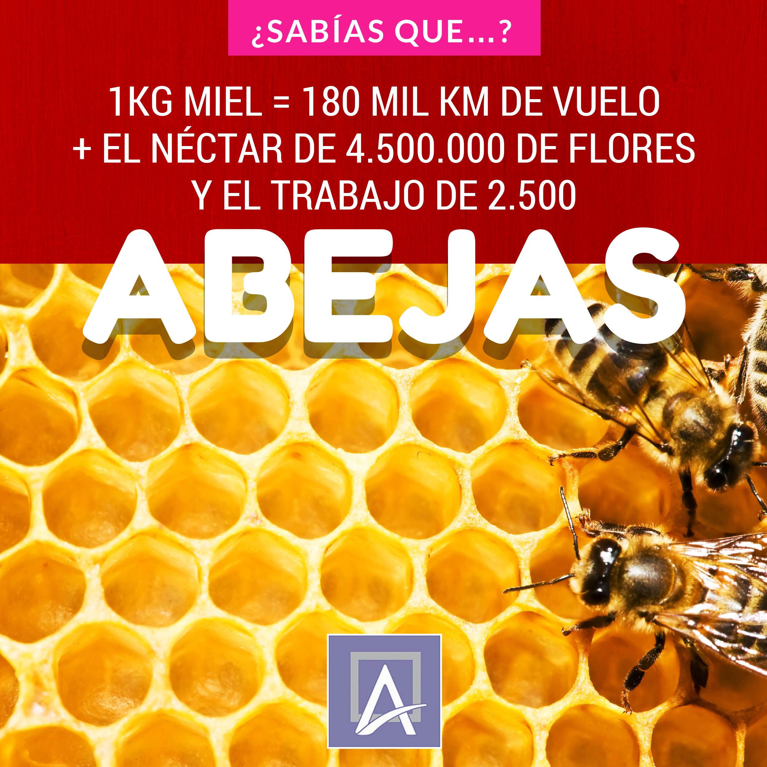 La importancia de las abejas en el medio ambiente